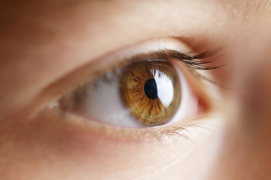 A human eye is made up of different parts all with different abilities and tasks