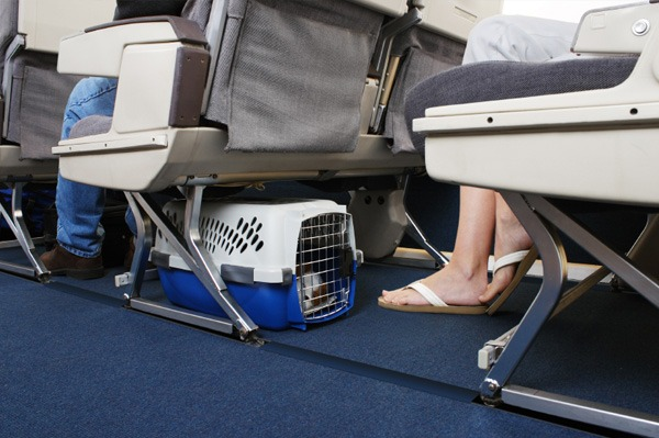 Some airlines might allow pets in cabin, so it might be worth checking if it's possible. | Photo: petmate.petrelocation.com