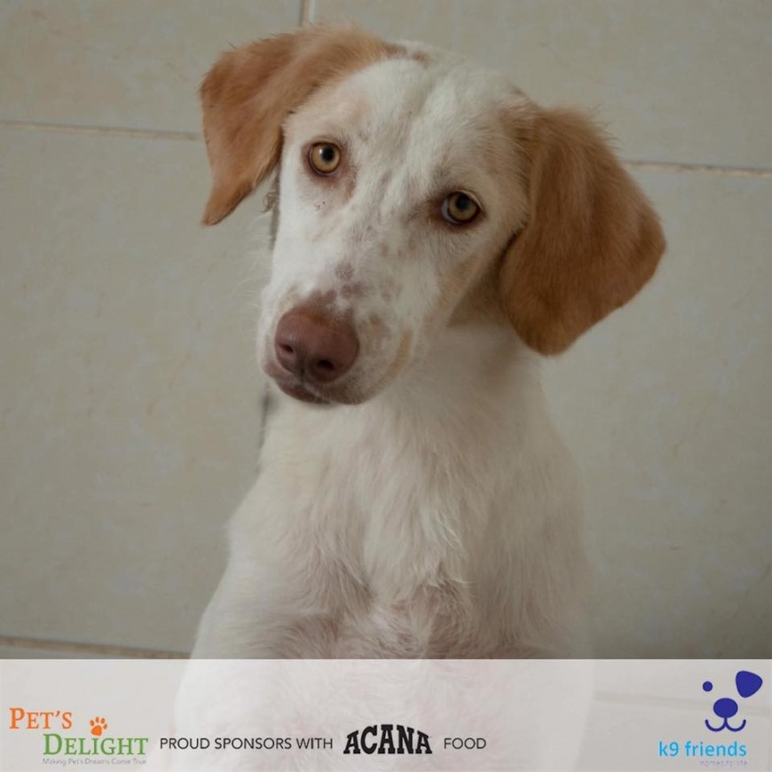 Dogs ready for adoption in UAE