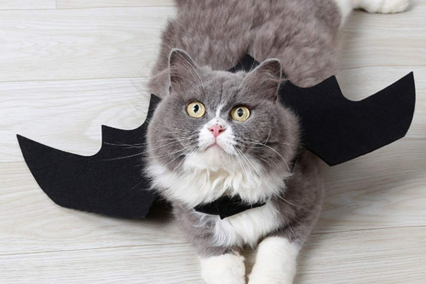 Bat wing halloween costume for pets
