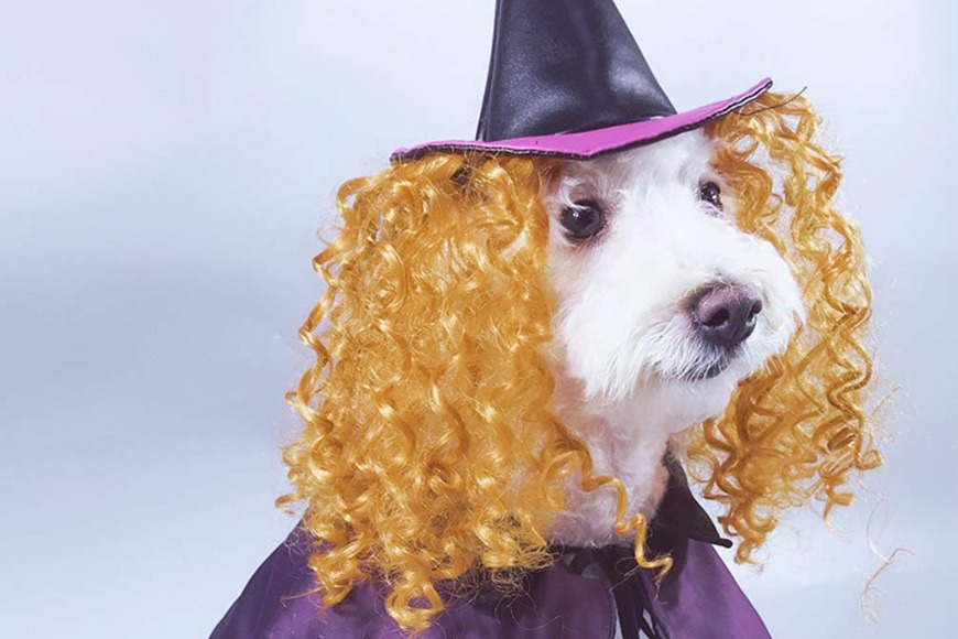 Witch costume for pets
