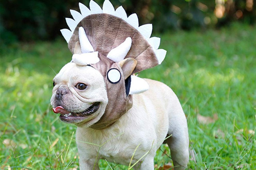 Triceratops dinosaur costume for dogs
