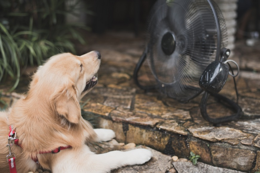 Signs and Symptoms of Heat Stroke for Dogs in Dubai
