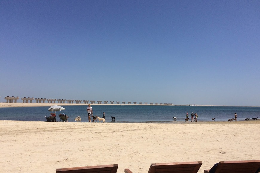 The best beaches in Dubai to visit - Jebel Ali Beach in Dubai