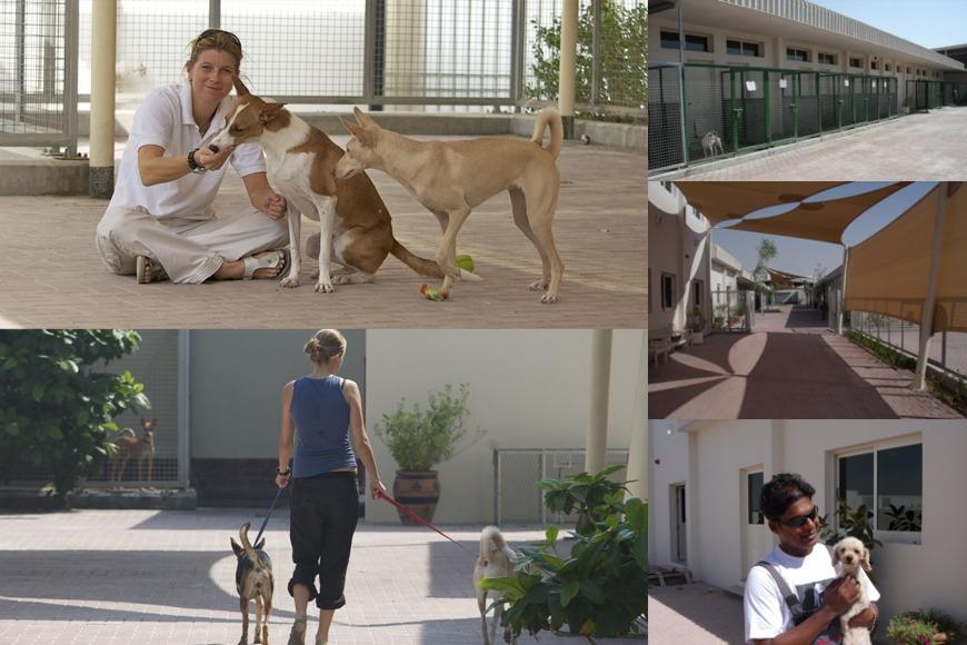 K9 Friends in Dubai