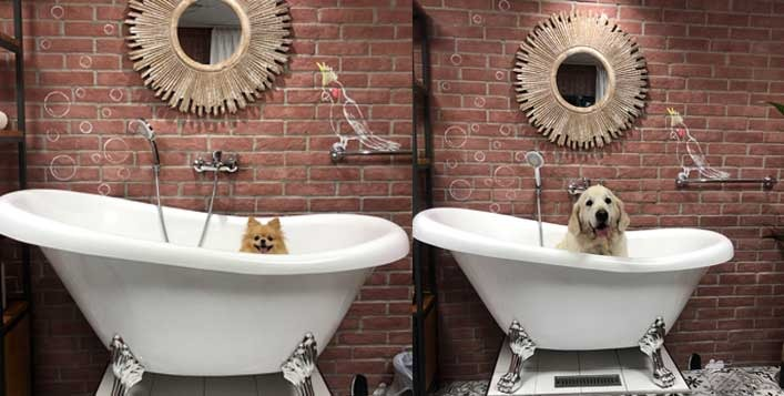 Best pet grooming and spa services in Dubai