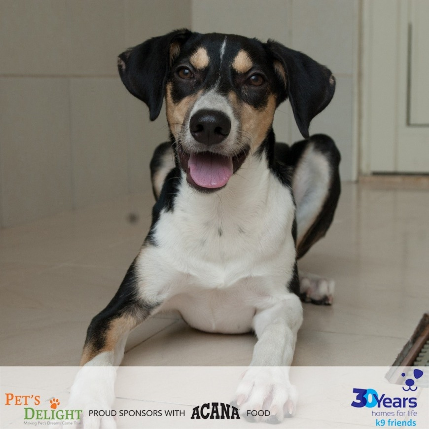 Healthy dogs to adopt in UAE