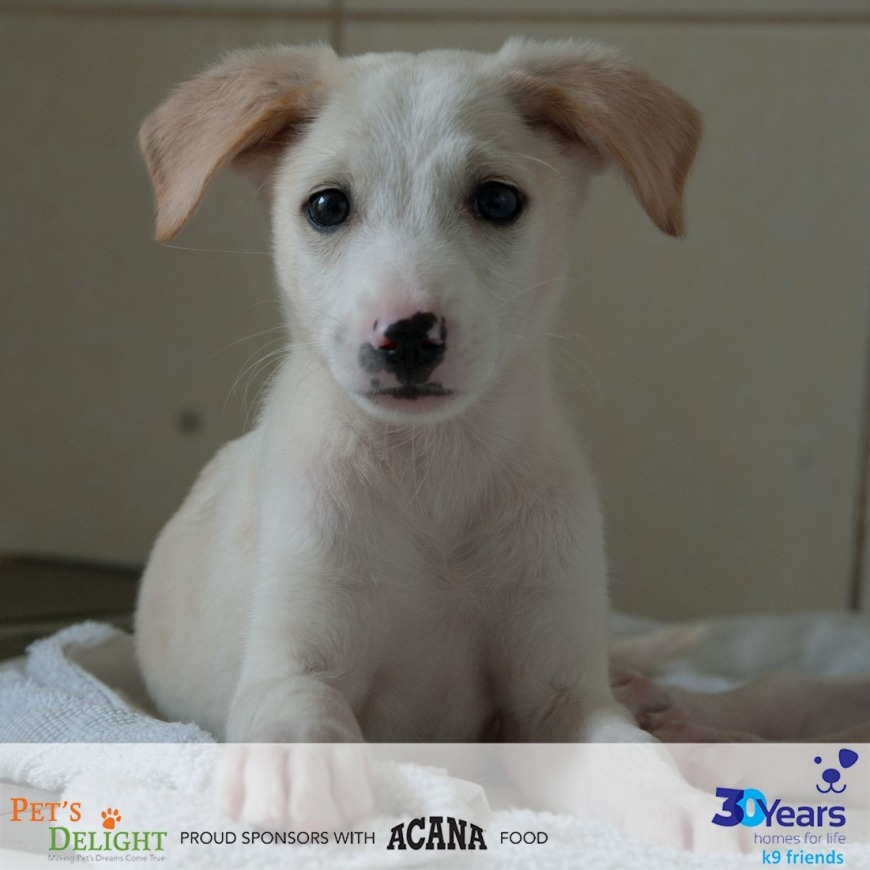 Dogs looking for a new family in the UAE