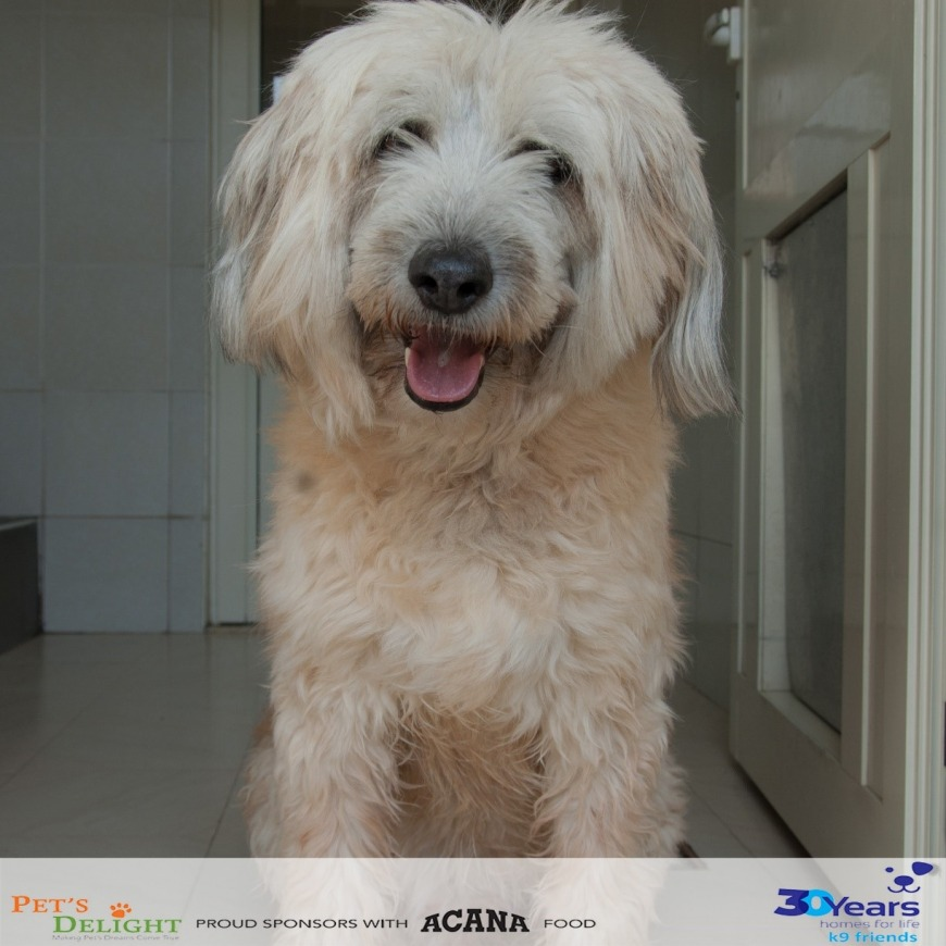 Where to adopt a dog in UAE
