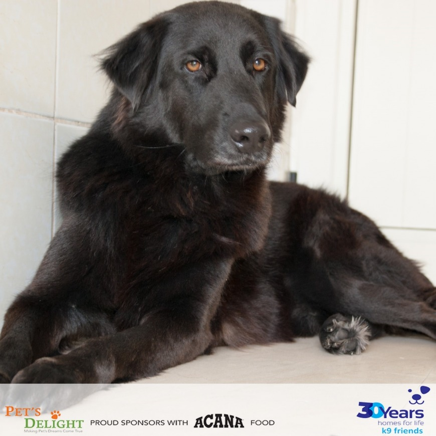 Adopt Shadow from K9 Friends