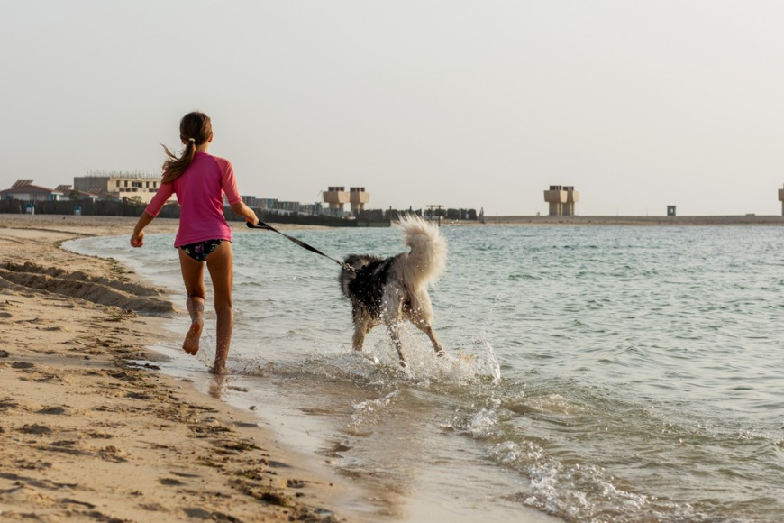 Getting a family dog in Dubai