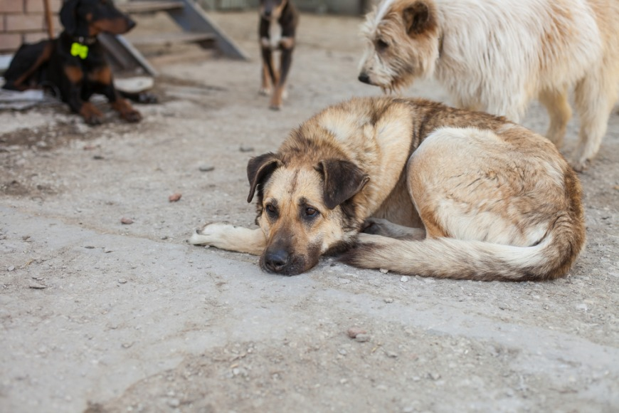 Dumped dogs in Dubai - what the UAE law states
