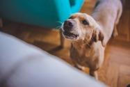 Noise complaints about dogs in Dubai