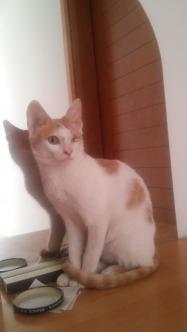 Kitty for urgent adoption
