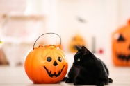 Halloween costumes for pets in Dubai and UAE