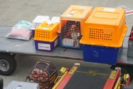 A guide on how to import a pet into Qatar