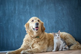 Raw Pet Food in Dubai: The Benefits and History of Raw Feeding