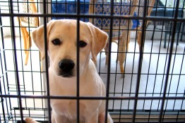 Animal Charities & Rescue Organisation in Abu Dhabi