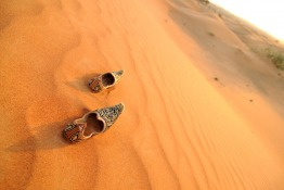 Explore the UAE With These Top 10 Trips
