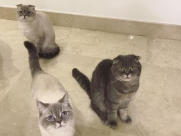 3 Cats ( indoor only)  up for adoption to a good home