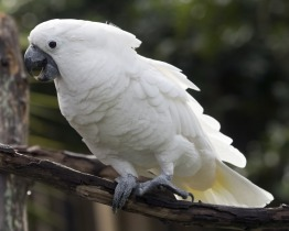 our talking parrots and baby parrots are ready for adoption