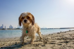Dog Friendly Beaches in Dubai