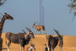 Dubai Safari Park in pictures