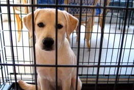 Charitable Animal Organisations in Singapore