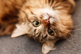 Relocation Tips for Your Cat