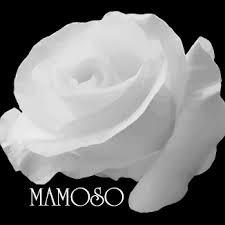Florist at MAMOSO Flower Trading