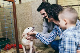 Animal Shelters and Rescue Groups in Dubai and the UAE