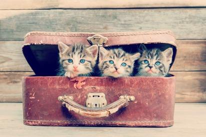 Pet relocations