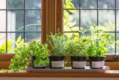 How to Grow Veggies and Herbs Indoors in Dubai