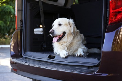 10 Car Safety Tips for Your Pet