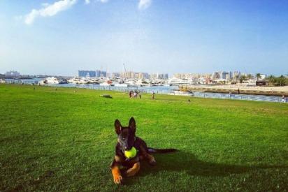 The Best Dog-Walking Spots in Dubai