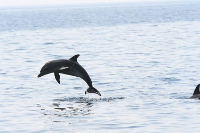 The UAE Dolphin Project