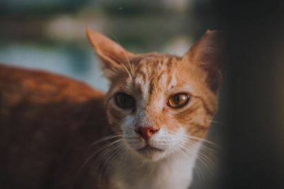 Kitty Snip in Dubai - cat adoption and TNR