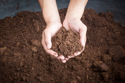 Choose the right compost for your Dubai garden
