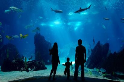 Kuwait Aquarium