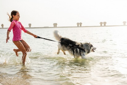 What to consider when getting a dog in Dubai