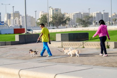 Pet-friendly parks, beaches, restaurants and hotels in Doha