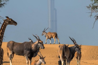 Dubai Safari Park in pictures