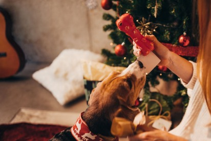 20 Holiday Gifts for Cats and Dogs in UAE