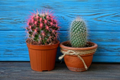 How to Get the Most Out of Your Cacti