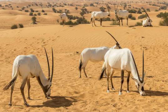 Hunting, Gathering and Fishing in Saudi Arabia: A Guide for Expats