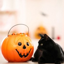 Scary Halloween Costumes for Pets