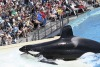 A Whale-Free SeaWorld is Heading for Abu Dhabi