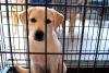 Charitable Animal Organisations in Singapore