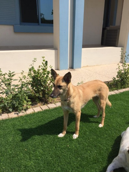 Timid, kind-natured dog looking for a new home