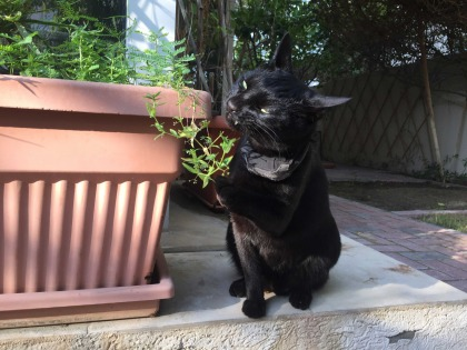 Cat looking for adoption